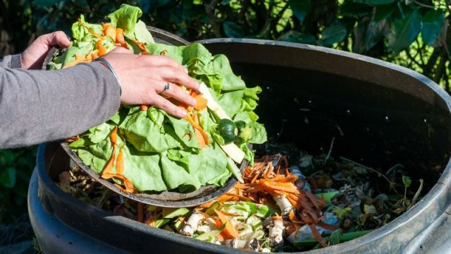 Compost alimentaire