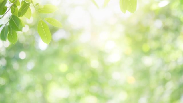 Confort d'été et végétation